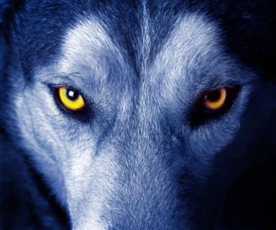 Der Mensch ist des Menschen Wolf …